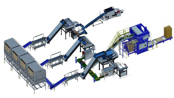 onion packaging line feature image